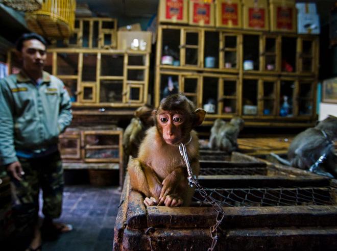 Bộ sưu tập ảnh thiên nhiên của năm: Hổ Sibera ôm cây, chú khỉ chill và con kiến bám lấy bọ cánh cam - Ảnh 10.