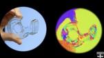 Đại học Harvard phát triển được máy quay giúp ta 'nhìn được như tôm'